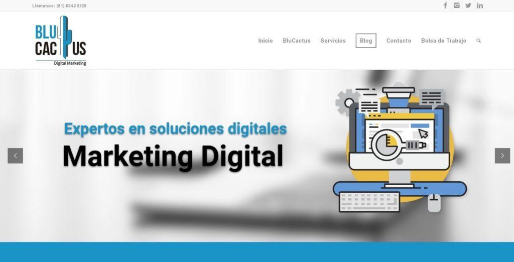 las mejores agencias SEO de México-blucactus