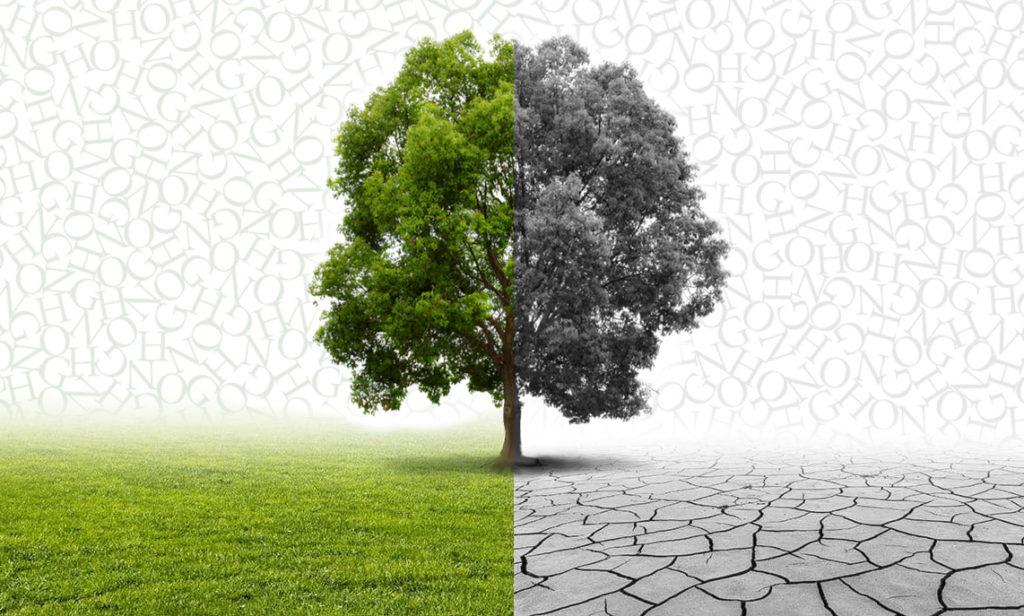 árbol verde y en blanco y negro